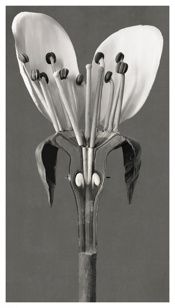 Art Forms in Mechanism XVIII, 2009-2016. Fotografía en edición de 3 ejemplares. 192 x 109 cm.