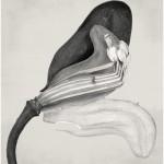 Tabularia. 2016. Fotografía sobre arpillera. 300 x 150 cm. Obra única